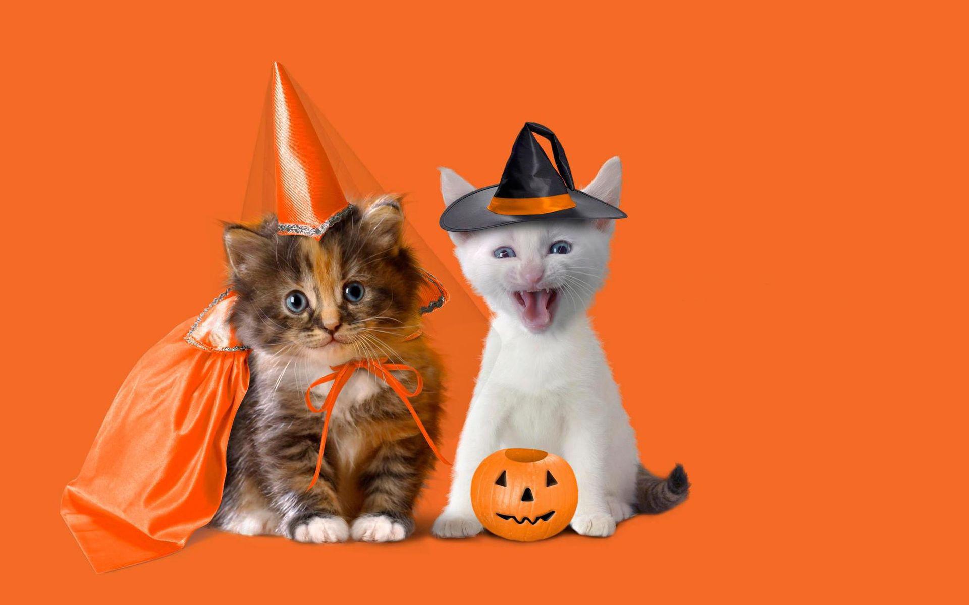 Два котенка в шляпах с тыквой