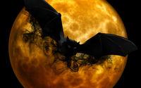 Летучая мышь и полная луна