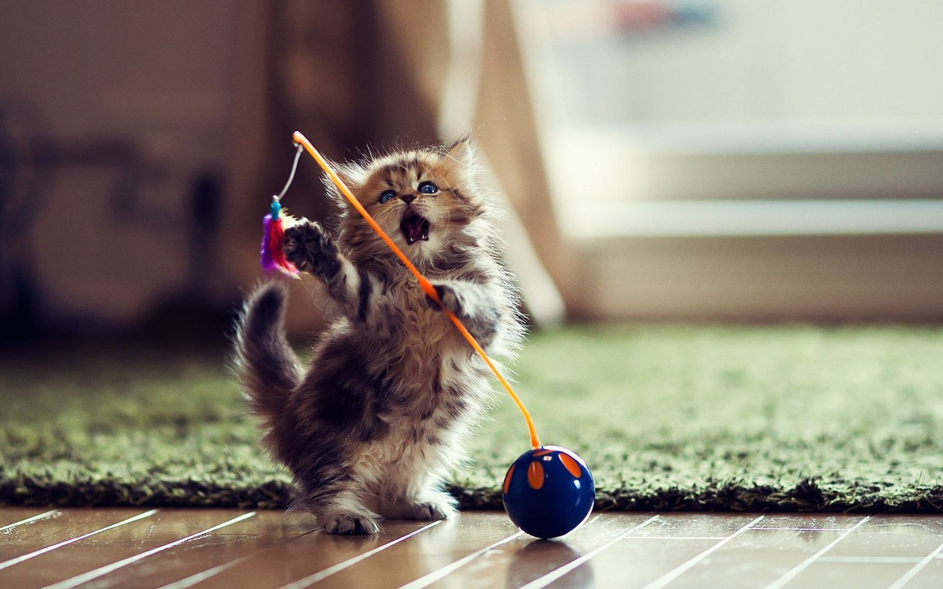 Картинки по запросу котенок играет
