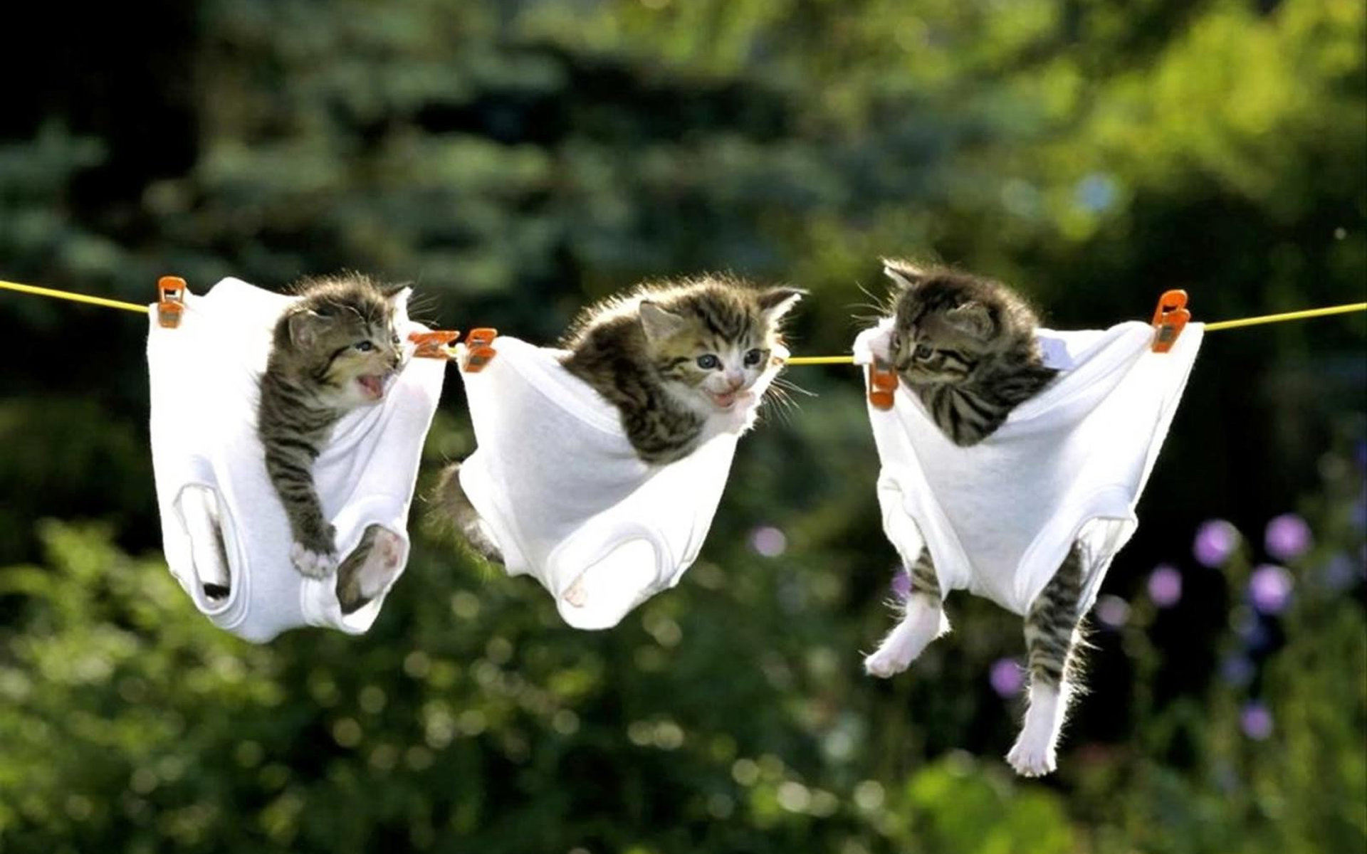 Котята сушатся на бельевой веревке
