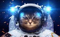 Кот космонавт в скафандре