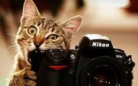 Кот с зеркальным фотоаппаратом