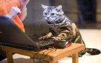 Котик активно работает за ноутбуком