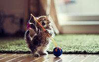 Маленький котенок играет с мячиком