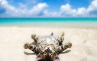 Котёнок лежит на пляже и загорает