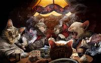 Коты как люди играют в покер за столом