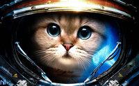 Котик в скафандре космонавта