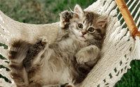 Милый котёнок кувыркается в гамаке
