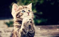 Котёнок попрошайка сложил лапки