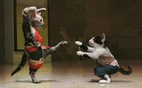 Кошачье каратэ, восточные единоборства котов