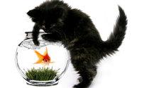 Чёрный котёнок ловит золотую рыбку в аквариуме