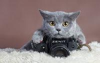 Кот фотограф на фотоаппарате зенит