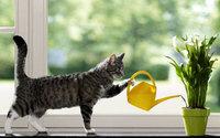 Кошка поливает цветы на окне