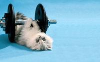Спортивный котик с гантелей