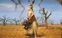 Бегемот в сумке у кенгуру