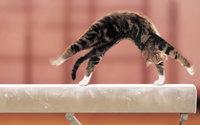 Кот гимнаст выполняет сложный трюк