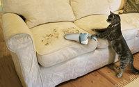 Кошка пылесосит диван от своей шерсти