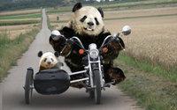 Две Панды на мотоцикле