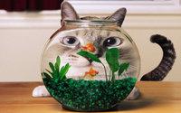 Кот любуется рыбками в аквариуме