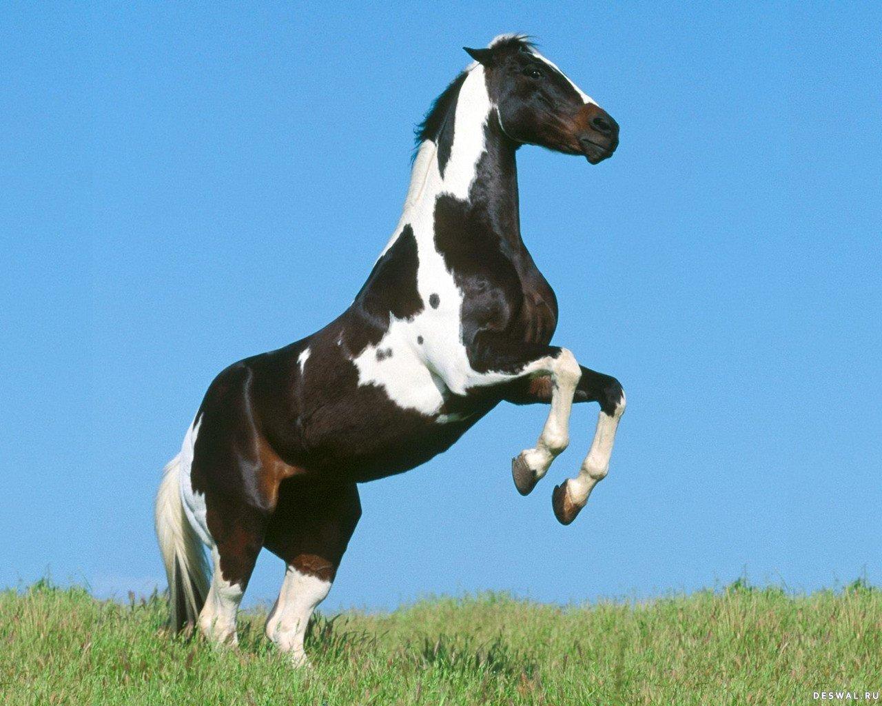 Лошадь встала на дыбы рисунок 4