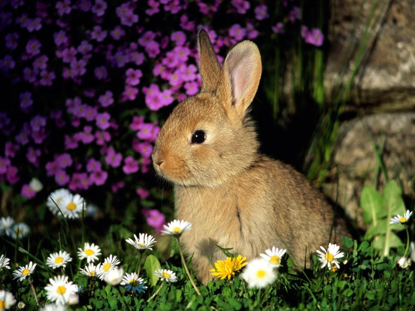 Зайчик на поляне цветов