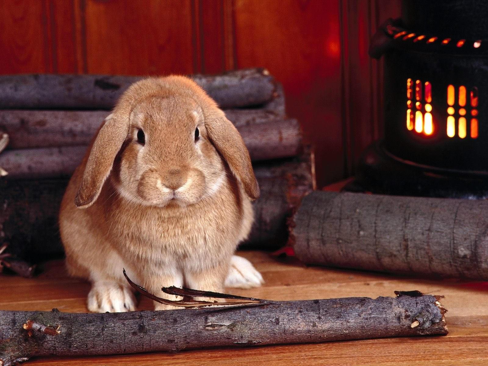 Кролик возле дров