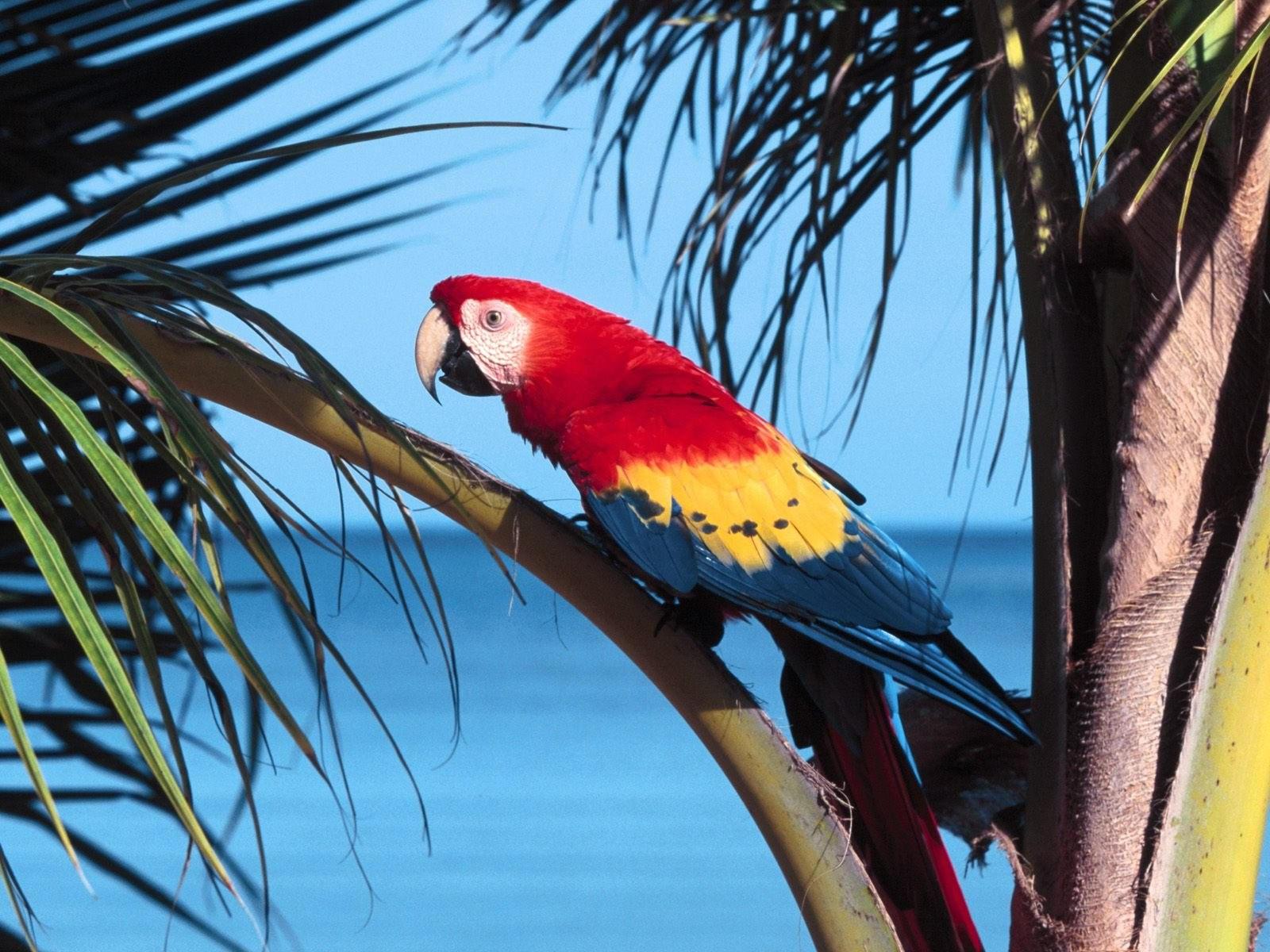Попугай на пальме