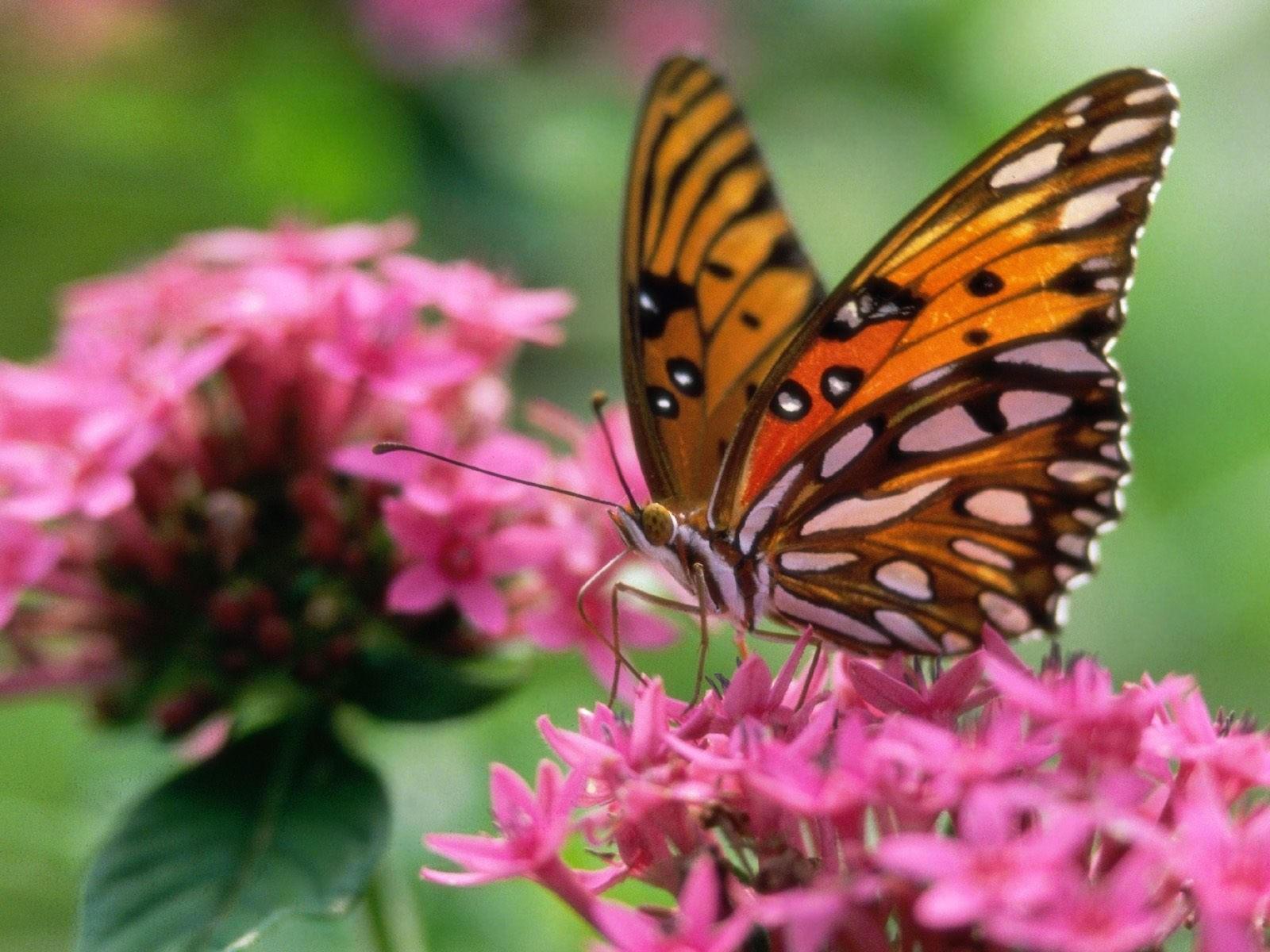 Бабочка желто-белого окраса