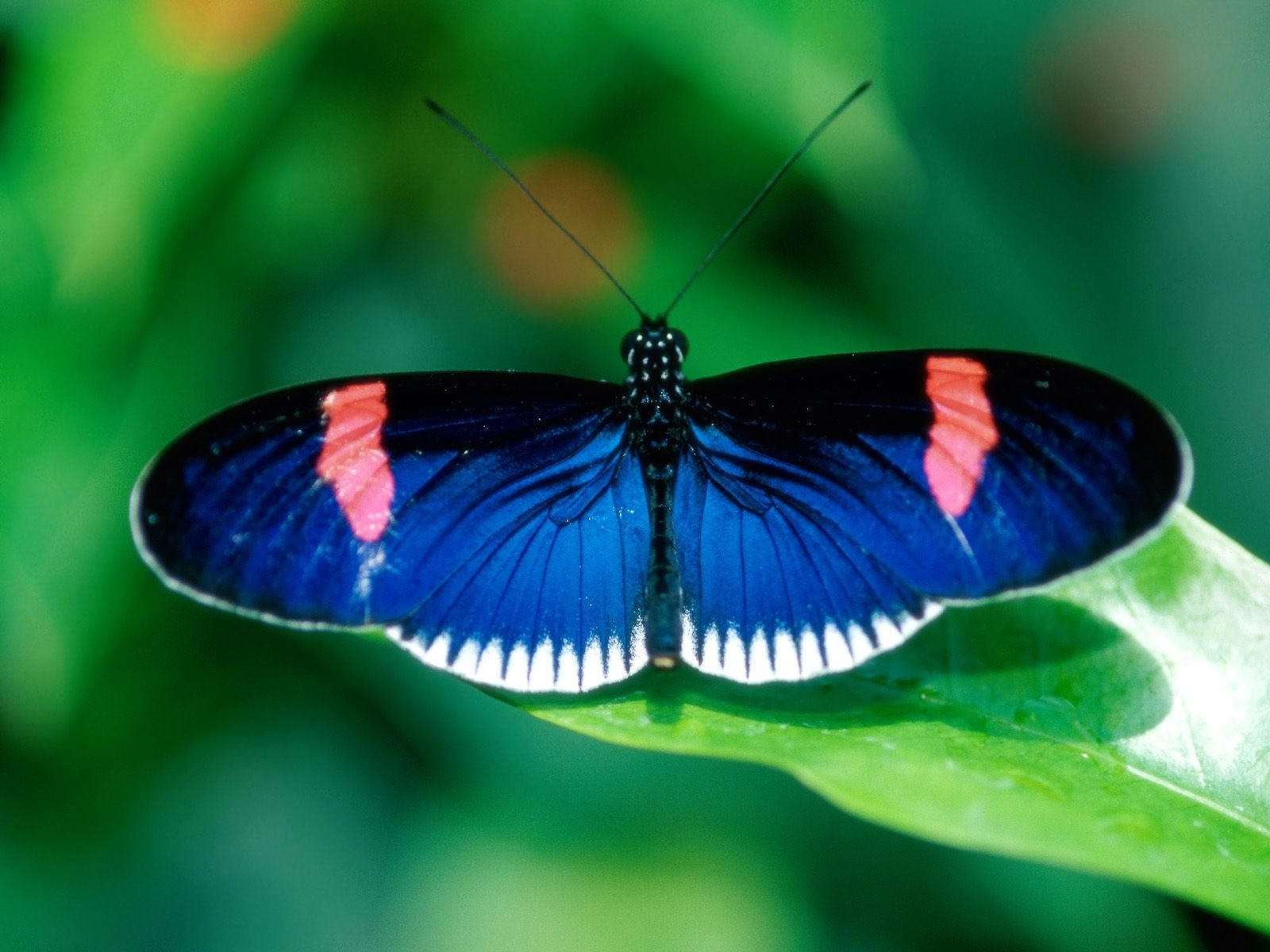 Фото красивых бабочек на цветах и их названия