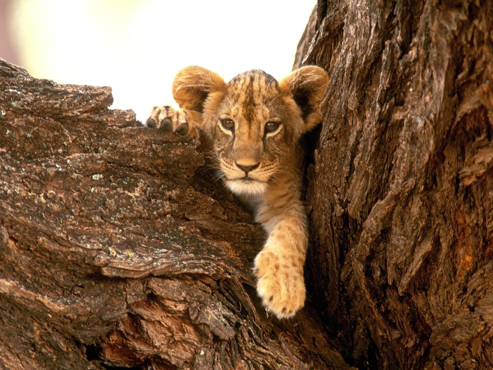 Львёнок в деревьях
