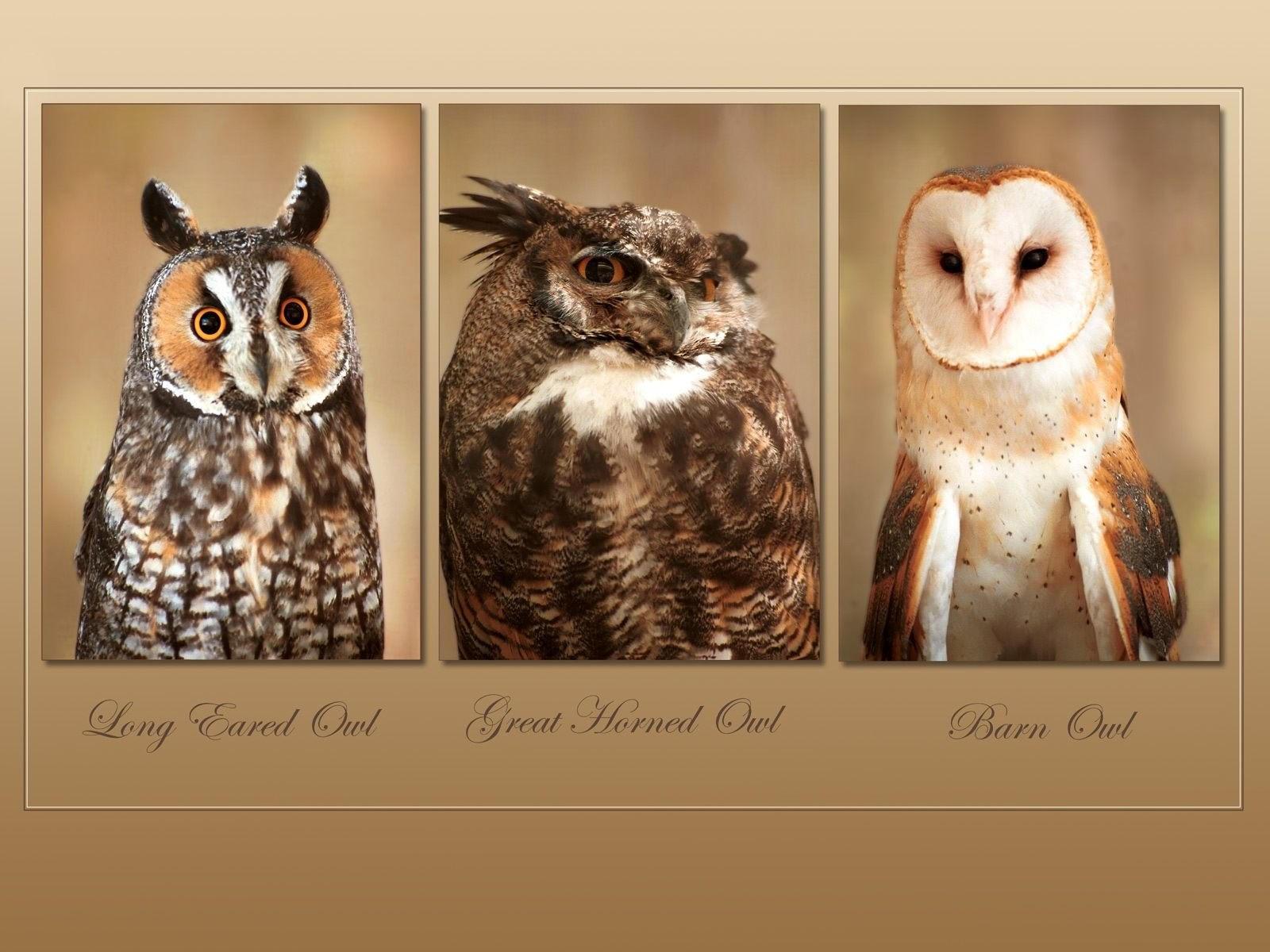 Три вида сов