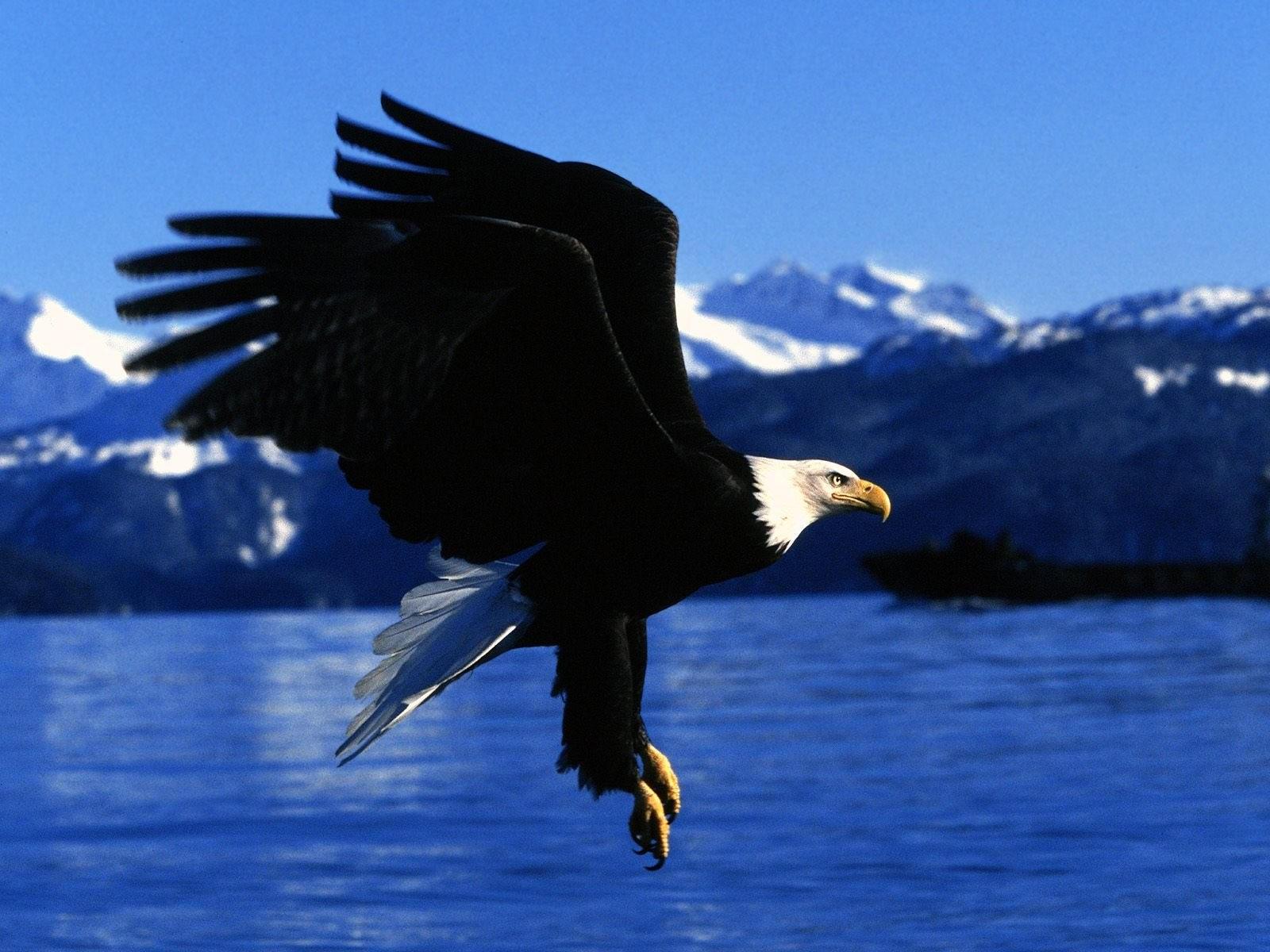 Орлан приземляется