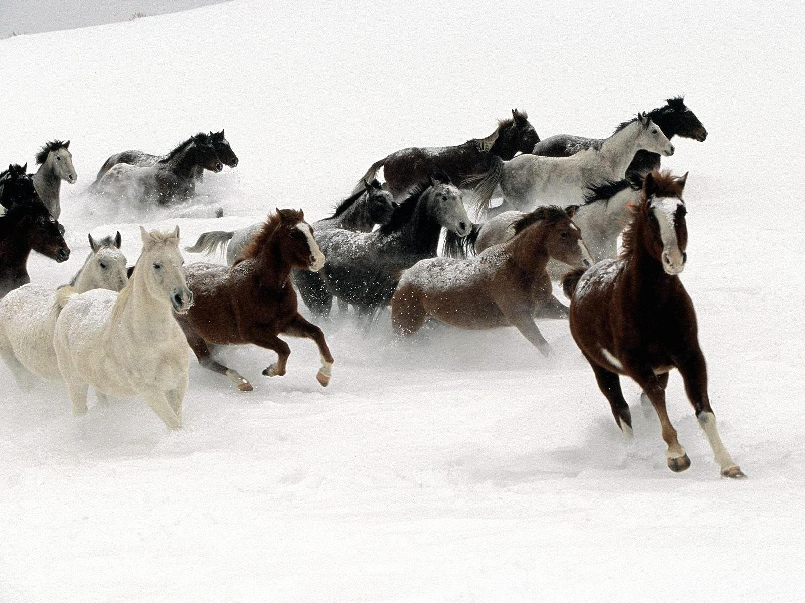 Бег стада лошадей