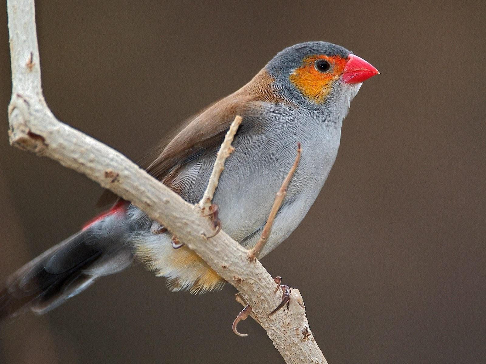 Птица коричнево-серая на ветке