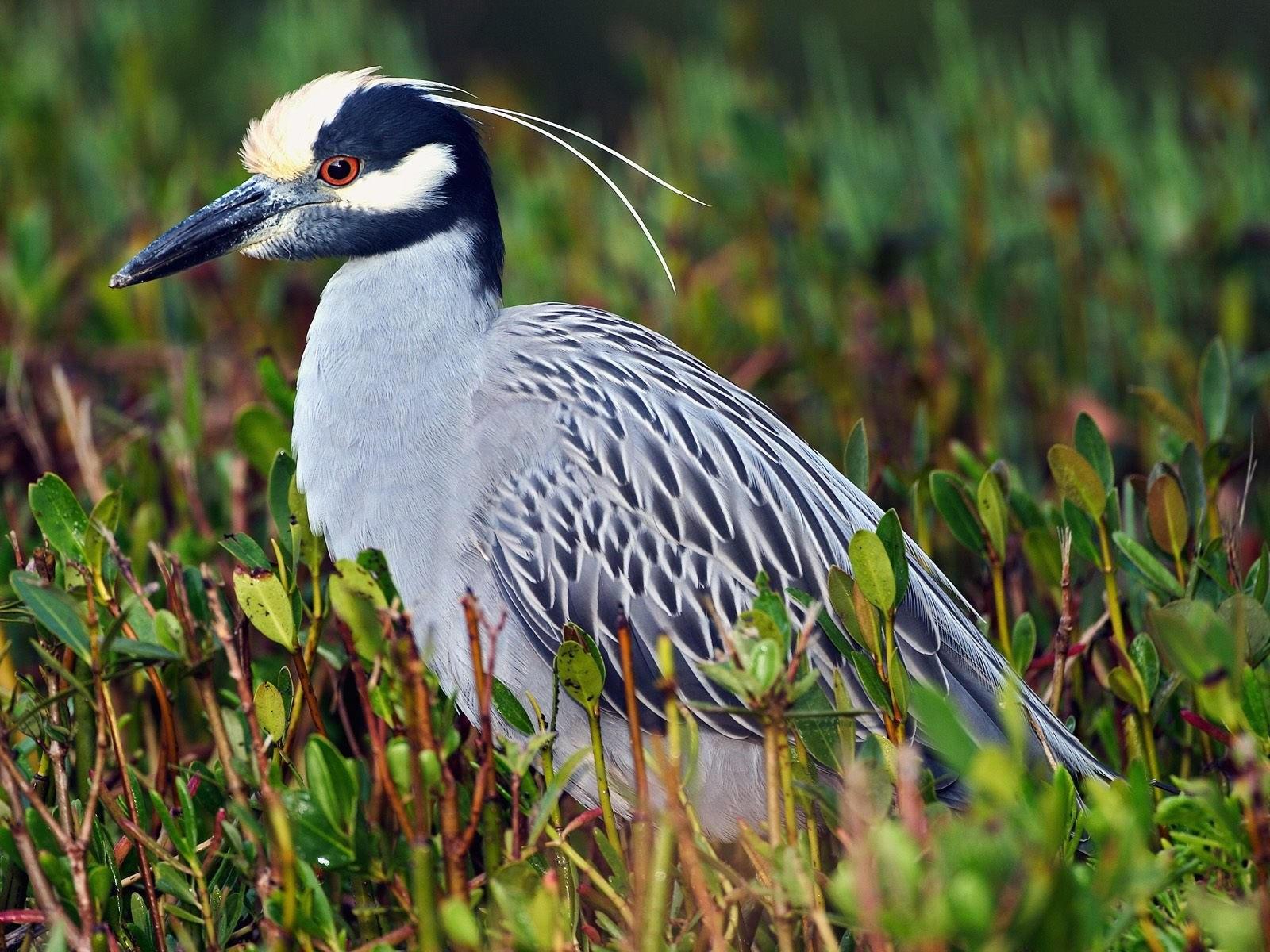 Серая птица в траве