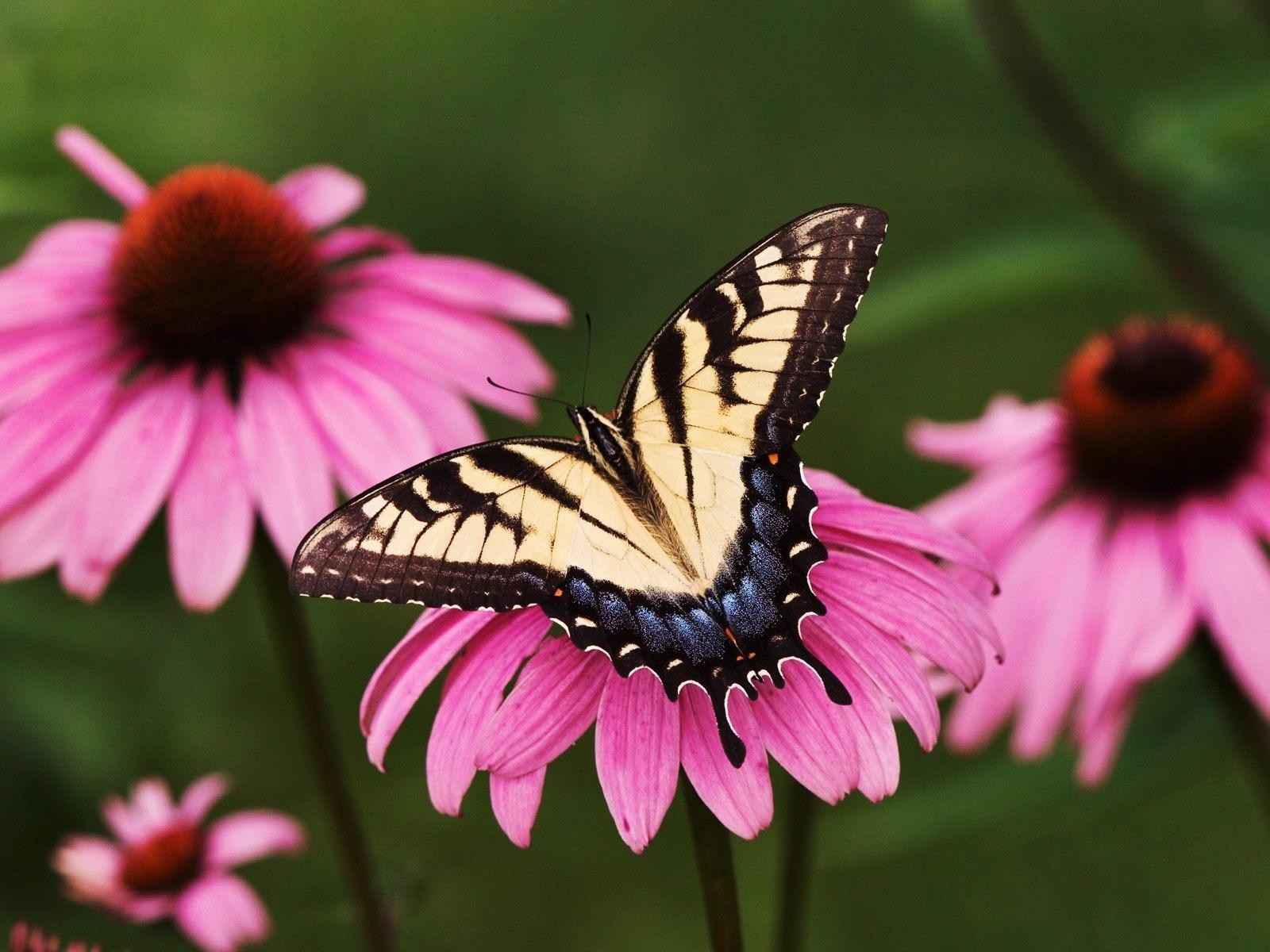 Бабочка на разовом цветке