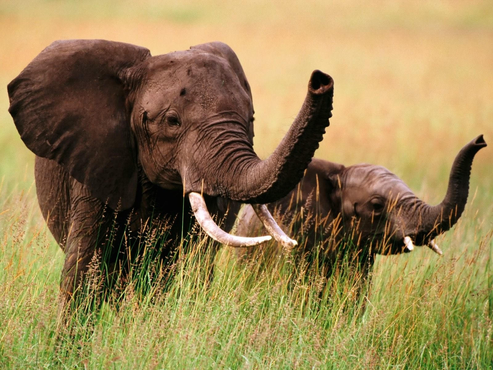 Слон со слонёнком