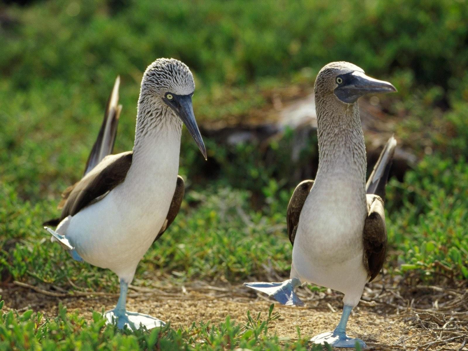 Пара интересных птиц