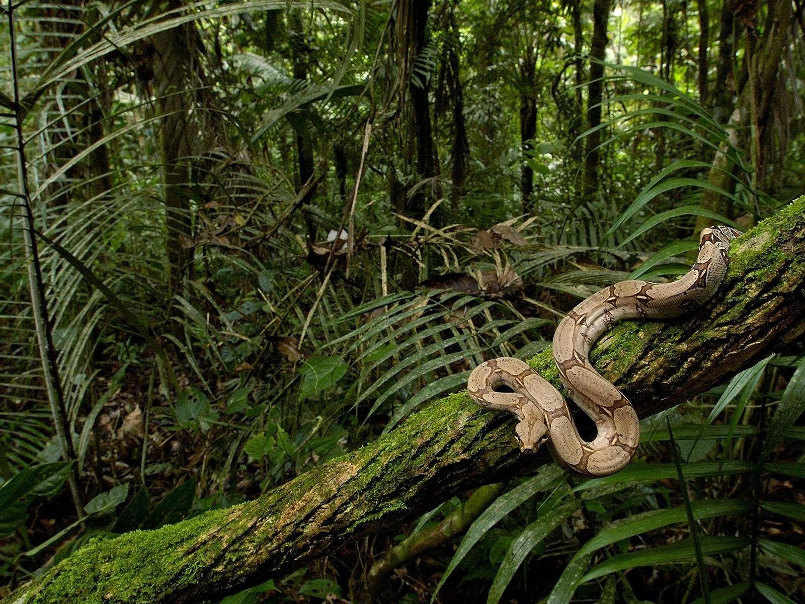 Змия на дереве