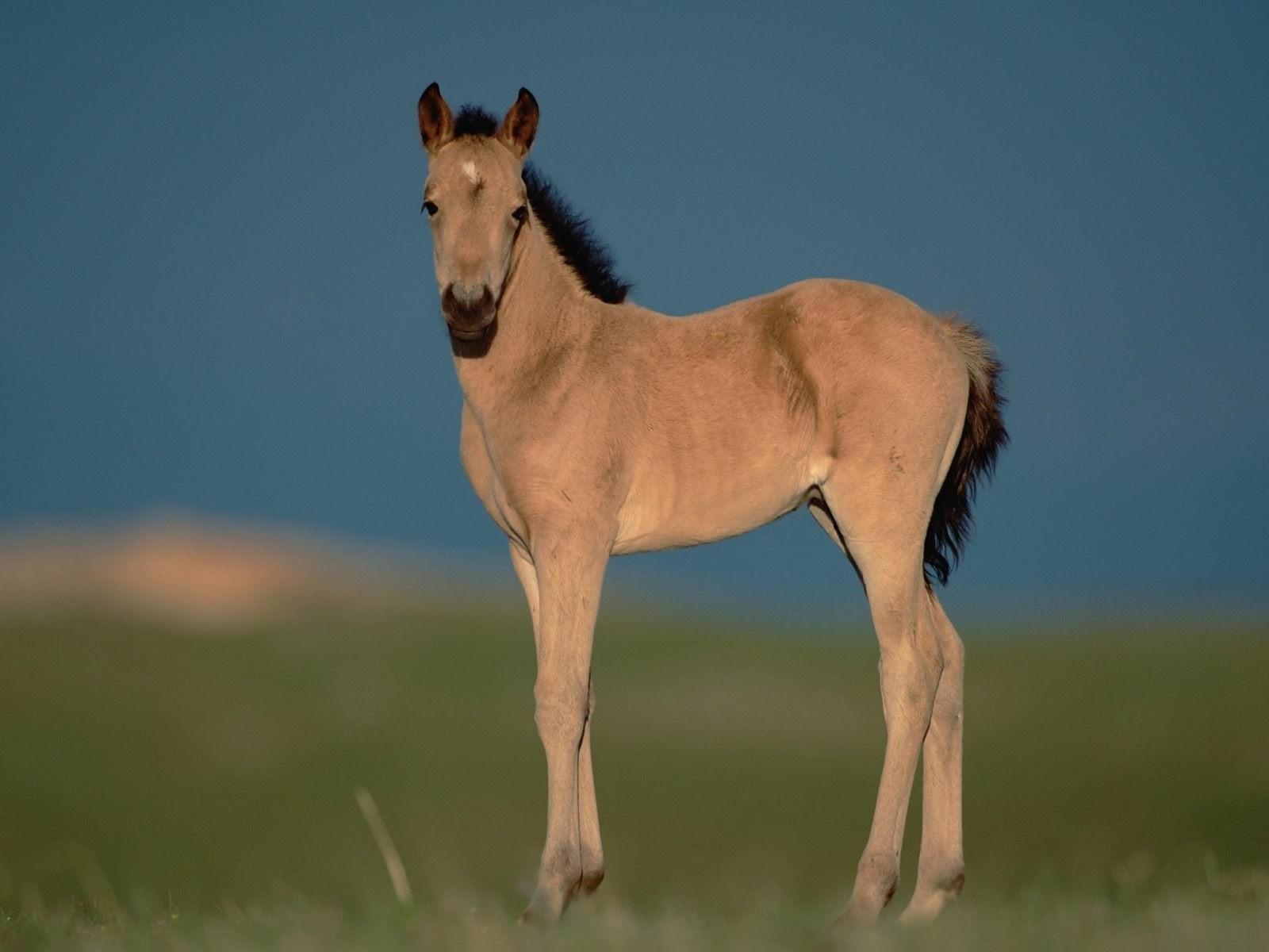 Лошадь в степи