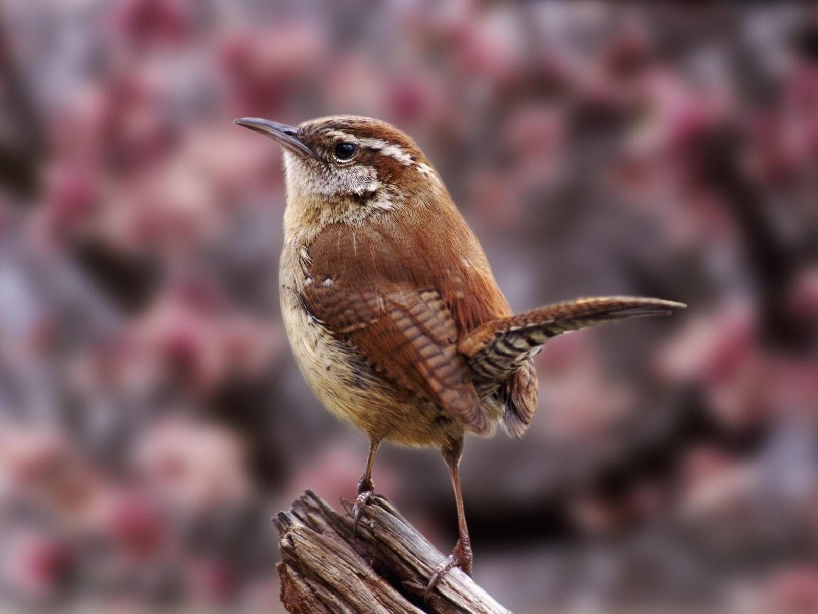 Коричневая птичка  на суку