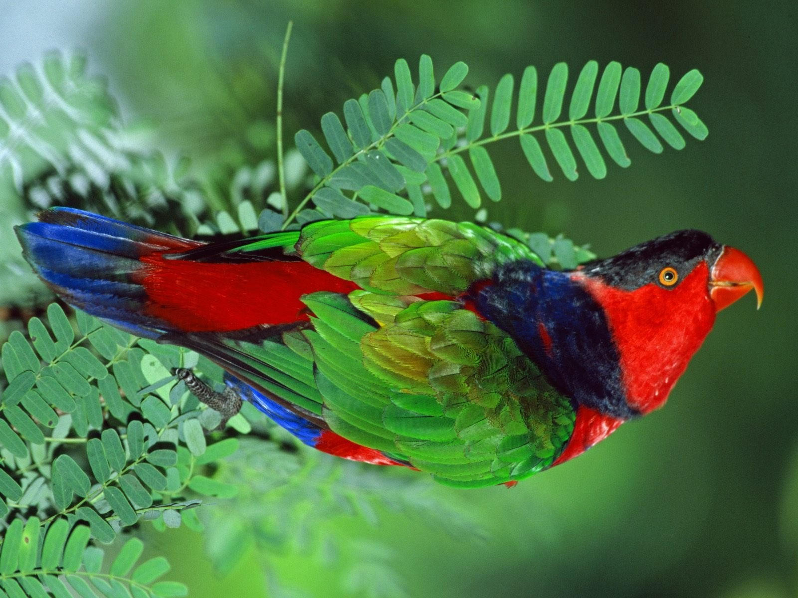 Разноцветная птица на зелёной ветке
