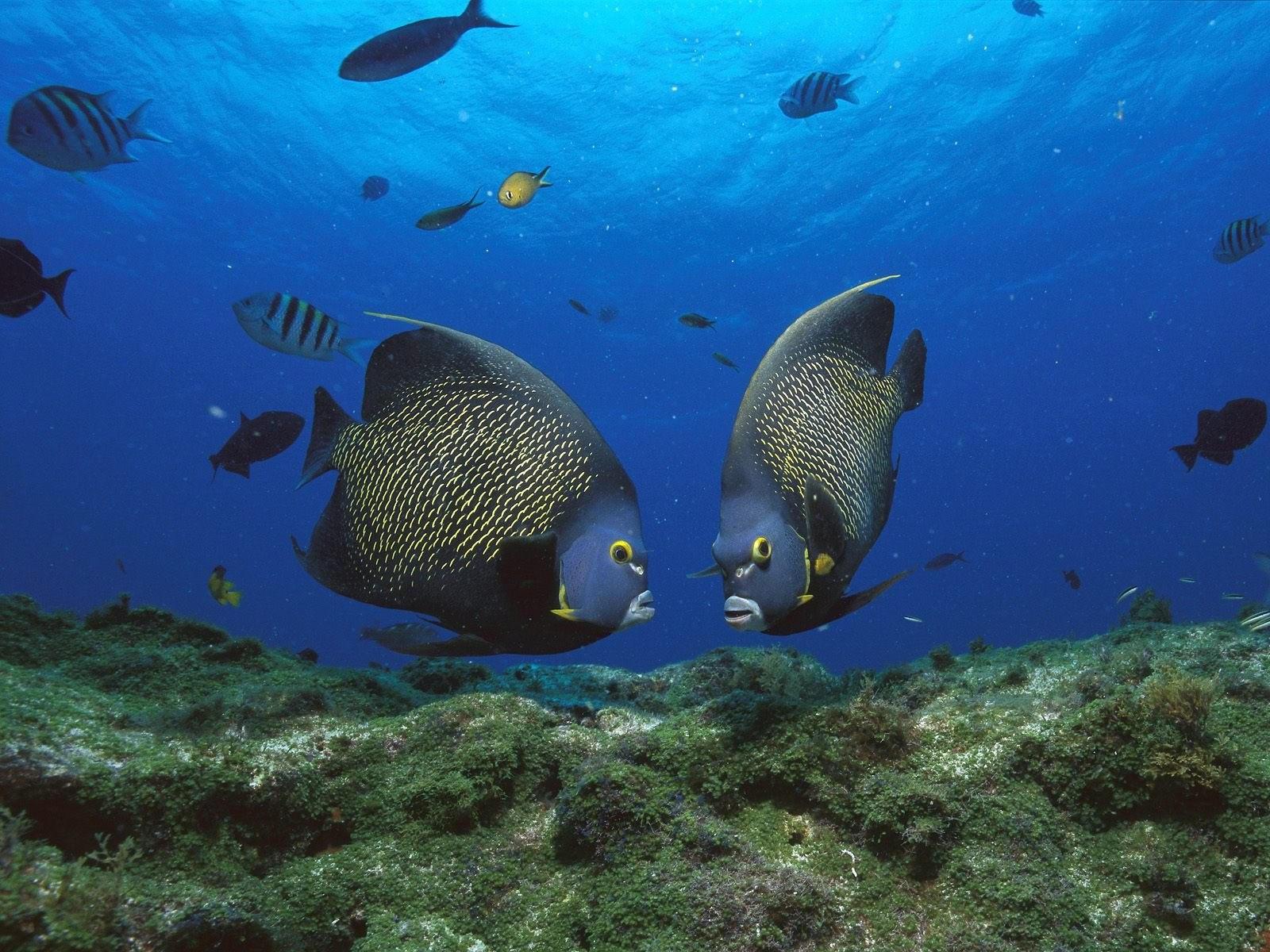 Рыбки на дне океана
