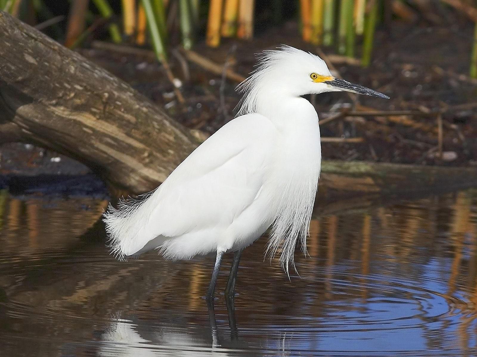 Белая птица в воде