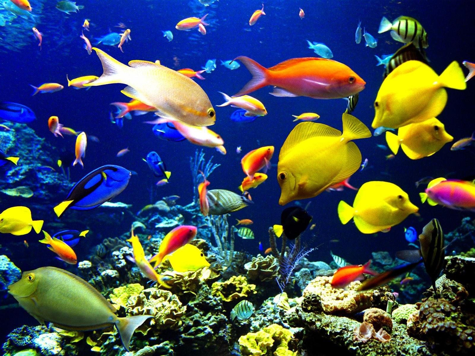 Животные подводного мира