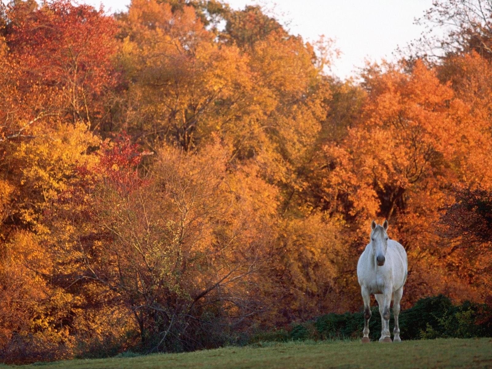 Лошадь в осеннем лесу