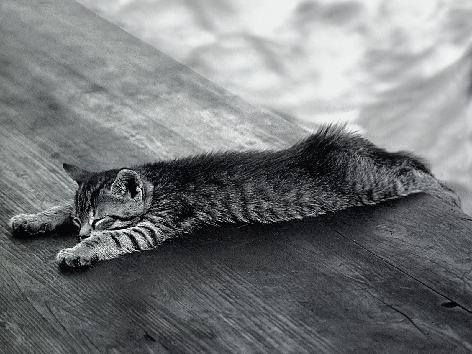 Серый котёнок спит на причале