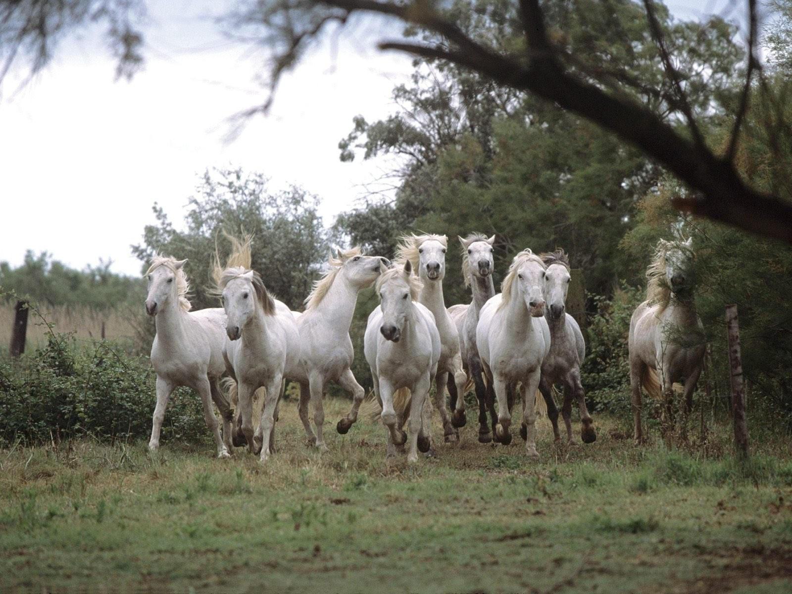 Бегущий табун лошадей