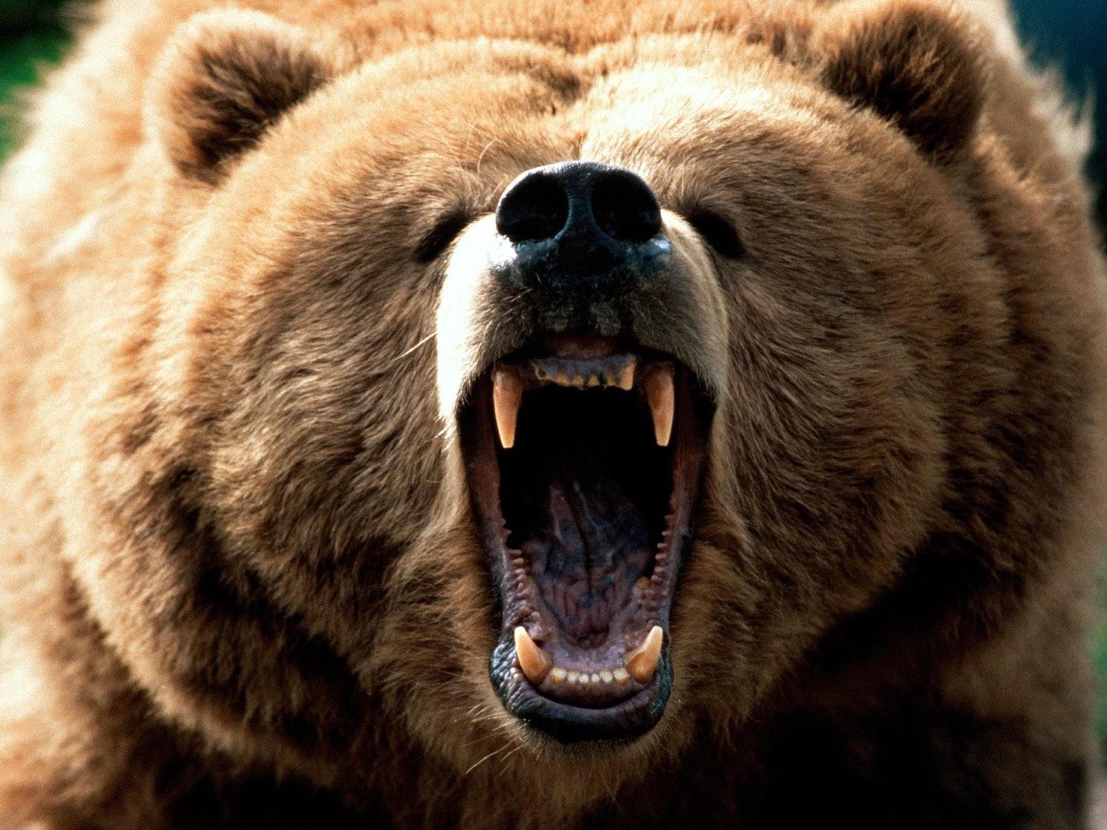 Пасть медведя