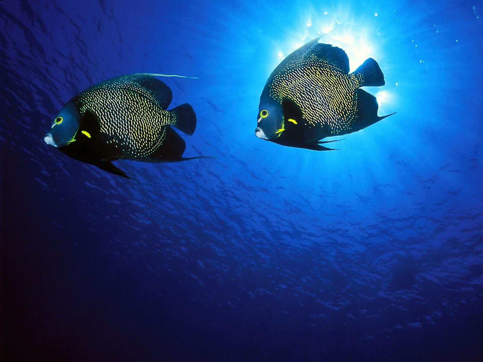 Две рыбки в море